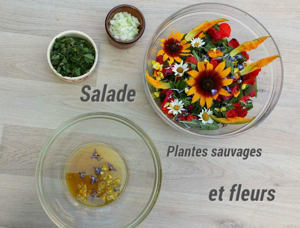 Préparations de plantes sauvages de Nicolas Guy