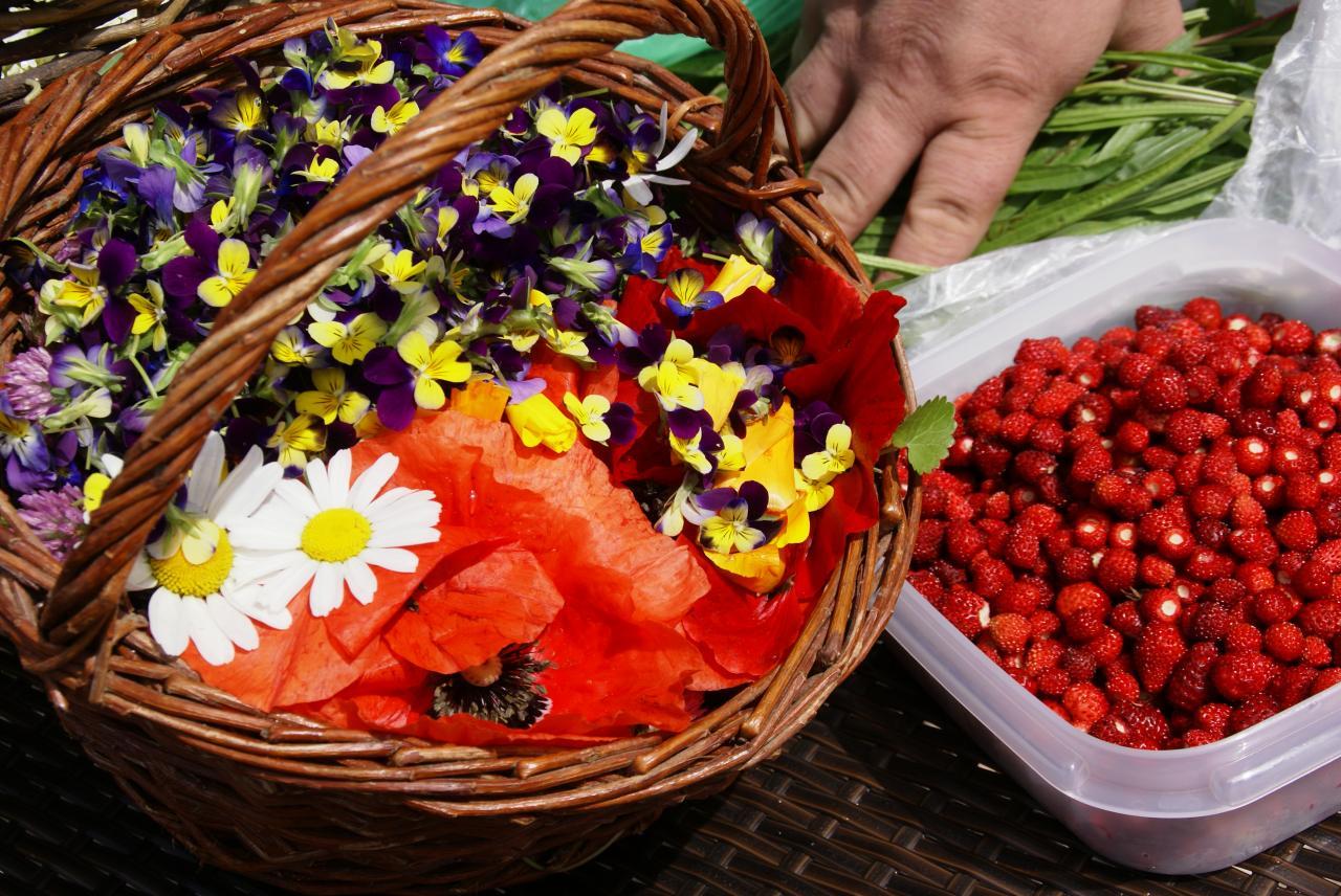 Récolte plantes sauvages dans les vosges
