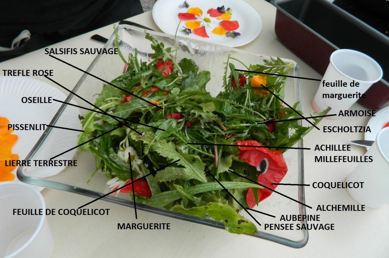 Salade aux plantes sauvages