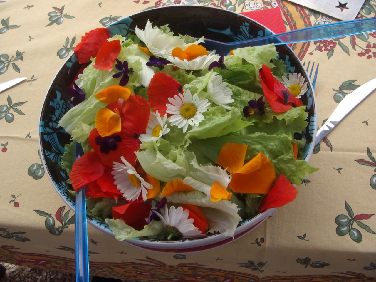 Salade sauvage colorée